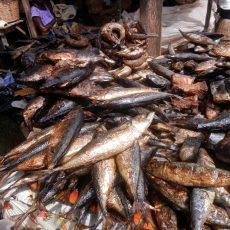 Dry, Salted, Smoked Seafood